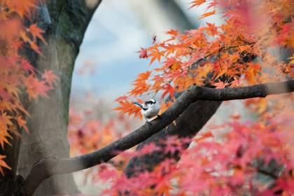 「秋(あき)」を韓国語では?季節を表す様々な単語