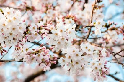 「春(はる)」を韓国語では?季節を表す様々な単語