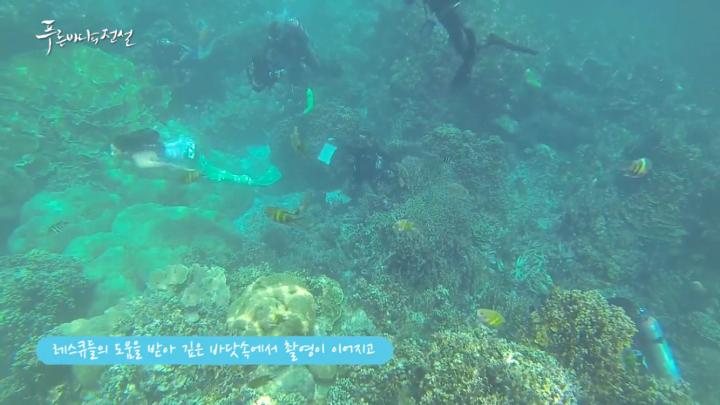 人魚の幻想的な水中撮影現場