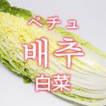 「白菜(はくさい)」を韓国語では?野菜のハクサイが好きです