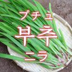 「ニラ」を韓国語では?野菜のにらが好きです
