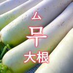 「大根(だいこん)」を韓国語では?野菜のダイコンが好きです