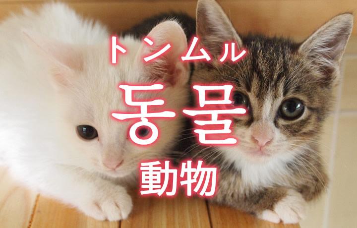 「動物(どうぶつ)」を韓国語では?さまざまな動物の単語一覧