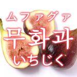 「いちじく」を韓国語では?「무화과(ムファグァ)」の意味