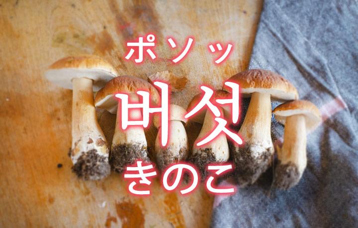 「きのこ(キノコ)」を韓国語では?「버섯(ポソッ)」の意味
