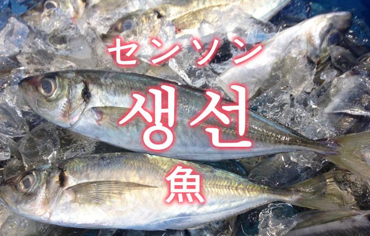 「魚(さかな)」を韓国語では?魚類の単語一覧
