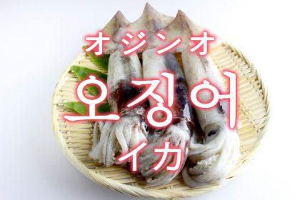 「イカ」を韓国語では?「오징어(オジンオ)」の意味