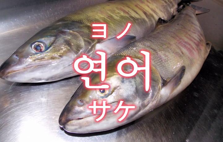 「サケ(鮭)」を韓国語では?「연어(ヨノ)」の意味