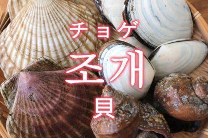 「貝(かい)」を韓国語では?貝類の単語一覧