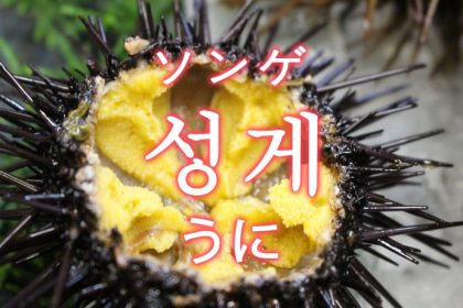 「うに(雲丹)」を韓国語では?「성게(ソンゲ)」の意味
